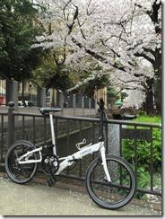 高瀬川桜まつり
